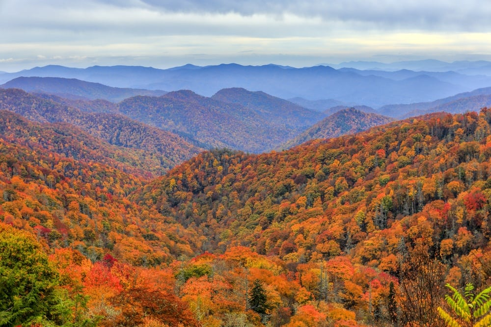 Vibrant-fall-foliage-in-the-Smoky-Mountains